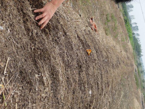 江苏蚯蚓养殖淘汰的三种方法